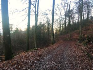 Waldbaden2